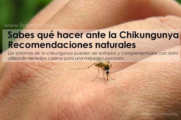 ef-chikungunya.jpg