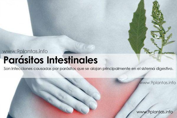Parasitos intestinales, aprende a eliminarlos