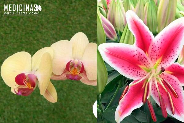 Orquídeas: Tipos, cuidados, trasplante, enfermedades