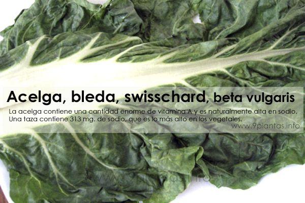 Acelga, bleda, swisschard, beta vulgaris