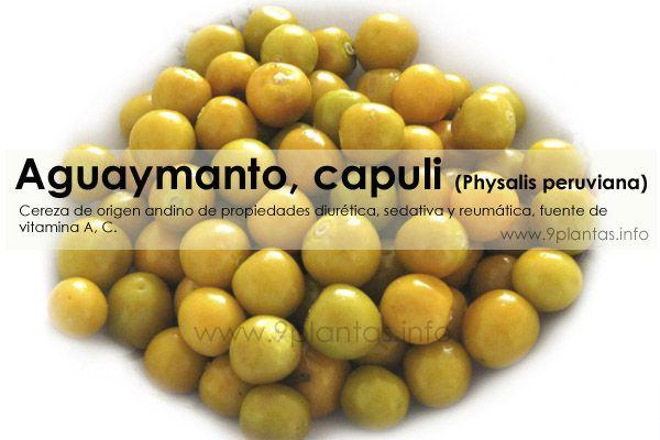 Aguaymanto, capuli (Physalis peruviana)
