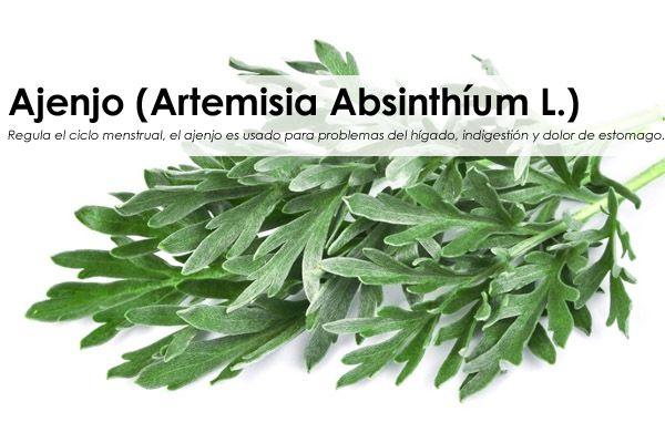Ajenjo, hierba santa, asensio (Artemisia Absinthíum L.)
