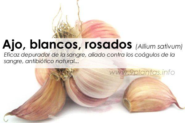 Ajo, ajos blancos, ajos rosados (Allium sativum)