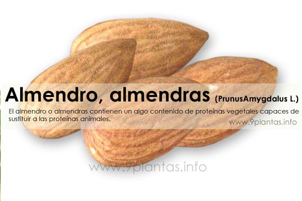 Almendro, almendras (PrunusAmygdalus L.)