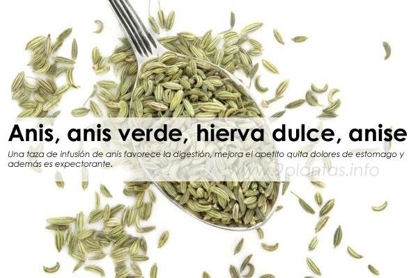 Anís las semillas que curan los males estomacales