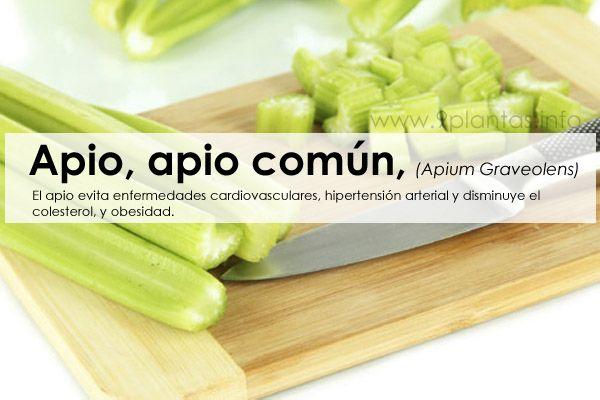 Apio para enfermedades cardiovasculares y obesidad