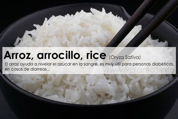 Arroz, arrocillo, rice (Oryza Sativa)