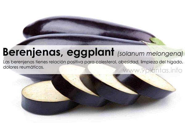 Berenjenas, eggplant (solanum melongena)