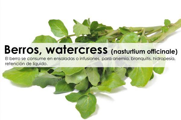 Berros, mastuerzo de agua, watercress (nasturtium officinale)