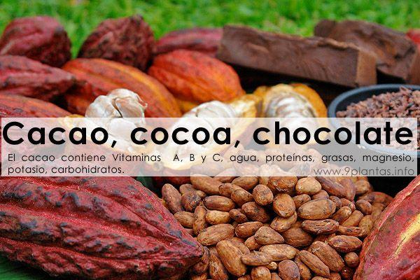 Cacao, cocoa, chocolate (theobroma cacao)