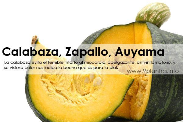 Calabaza, Zapallo, Auyama  (Cucurbita Maxima Dutch.)
