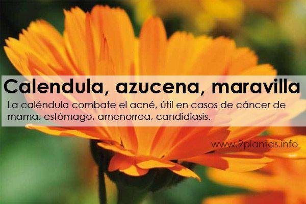 Calendula, azucena, maravilla (Calendula Officinalis)