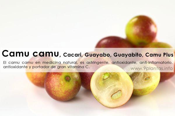 Camu camu, Cacari, Guayabo, Guayabito, Camu Plus (Myrciaria dubia)