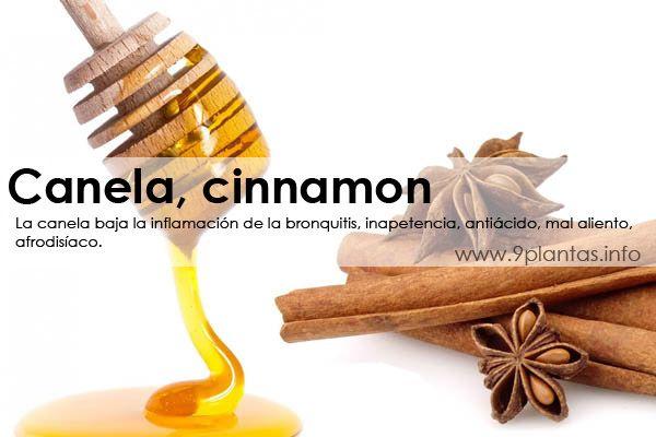 Canela, cinnamon (cinnamomun zeynalicum breine)