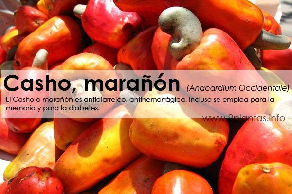 Casho, marañón (Anacardium Occidentale)