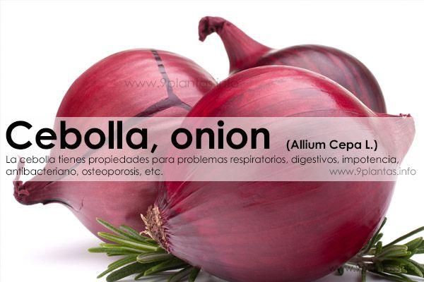 Cebolla, onion  (Allium Cepa L.)