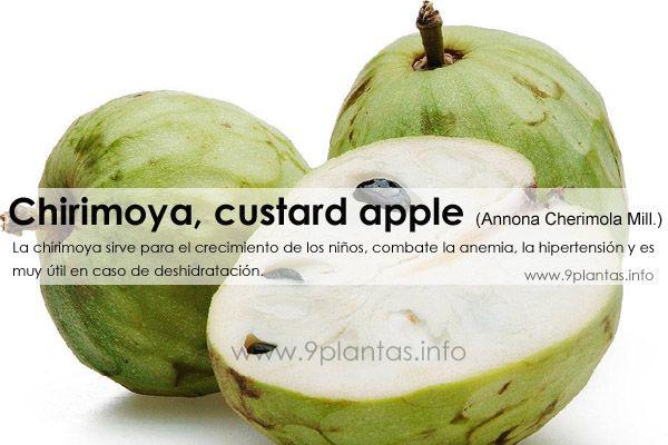 Chirimoya, custard apple (Annona Cherimola Mill.)