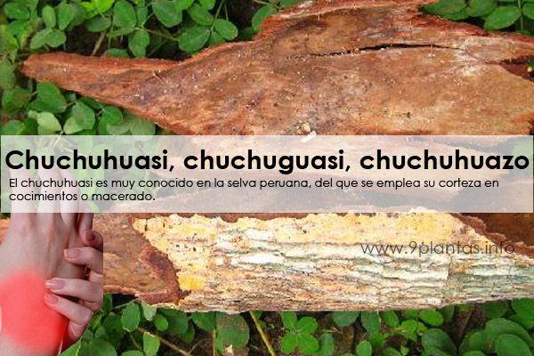 Chuchuhuasi, chuchuguasi, chuchuhuazo, capinuri (Maytenus laevis)