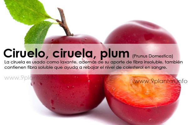Ciruelo, ciruela, plum (Prunus Domestica)