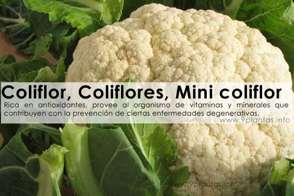 Coliflor, Coliflores, Mini coliflor (Brassica oleracea)