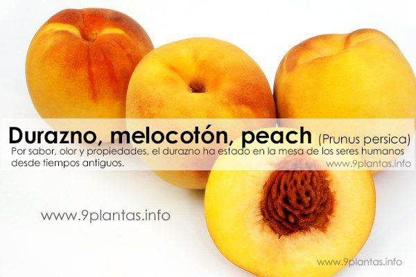 Durazno, melocotón, duraznero, peach (Prunus persica)