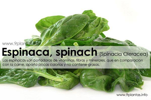 Espinaca, spinach (Spinacia Oleracea)