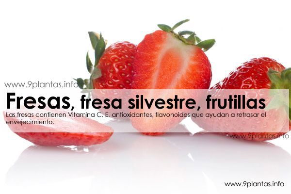 Fresa, fresa silvestre, frutillas (Fragaria Vesca L.)