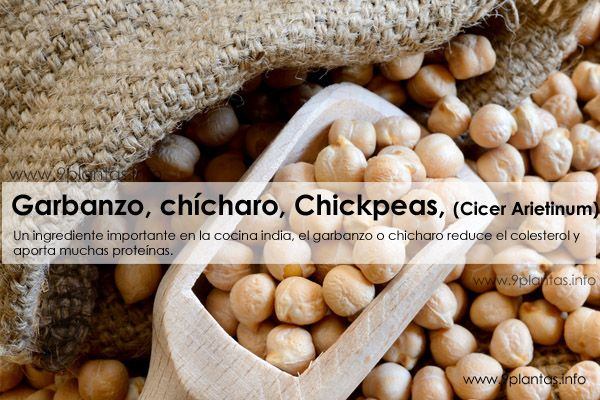 Garbanzo, chicharo, Chickpeas, (Cicer Arietinum)