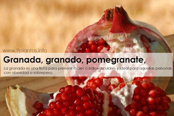 Granada, granado, pomegranate, (Punica granatum)
