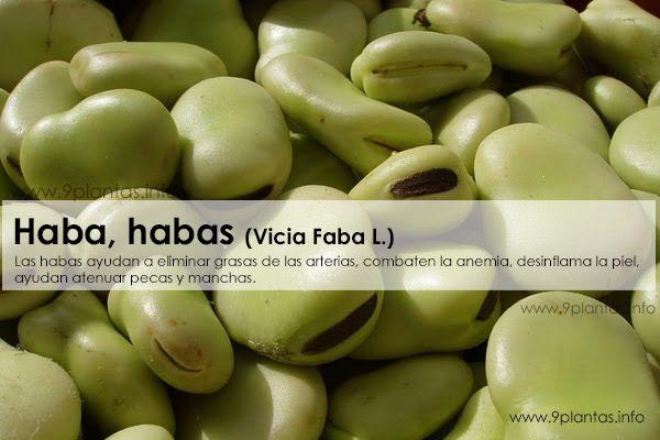 Haba (Vicia Faba L.)