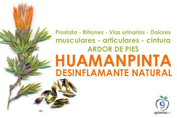 Huamanpinta desinflamante natural