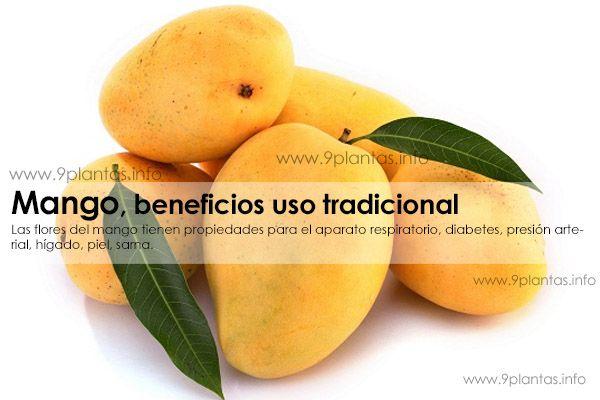 Mango uso tradicional (Mangifera Indica)