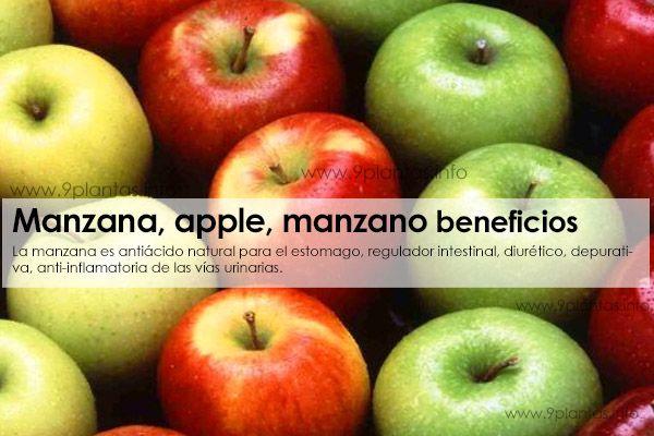Manzana, apple, manzano uso tradicional (Malus Domestica)