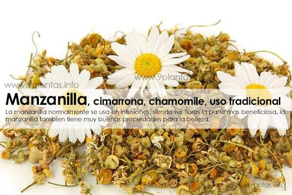 Manzanilla, cimarrona, chamomile, uso tradicional (Matricaria Chamomilla L.)