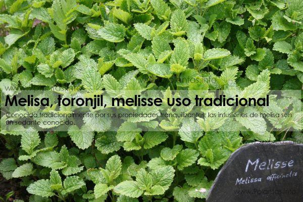 Melisa, toronjil, melisse uso tradicional (Melissa Officinalis L.)