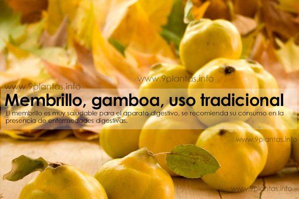 Membrillo, gamboa, uso tradicional (Cydonia Oblonga Mill.)