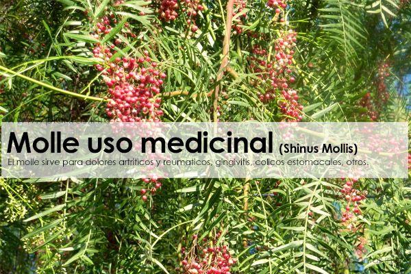Molle uso medicinal (Shinus Mollis)