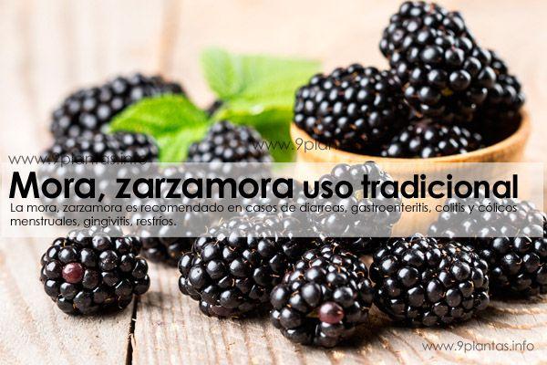 Mora, zarzamora uso tradicional (Rubus Fructicosus L.)