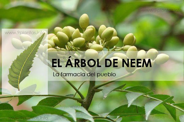 Neem, la farmacia del pueblo