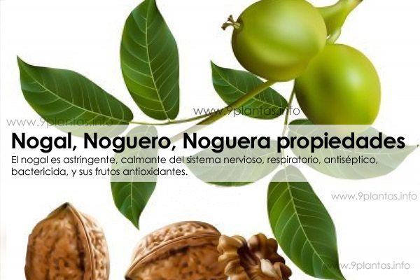 Nogal, Noguero, Noguera, propiedades (Juglans Regia)