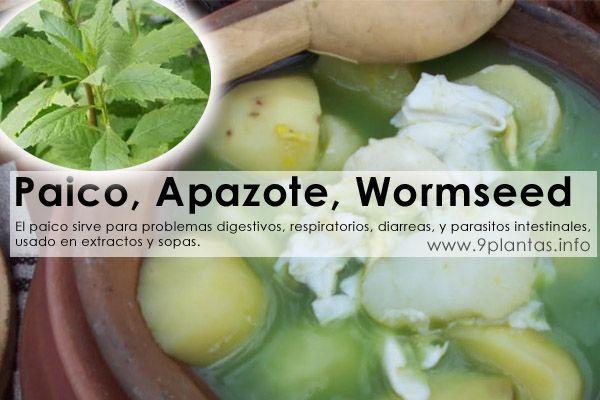 Paico, Apazote, Wormseed (Chenopodium Ambrosioides)