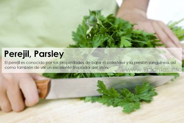 Perejil, Parsley (Petroselinum sativum)