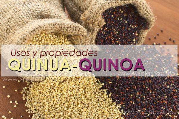 Quinua, quinoa la semilla que no debe faltar en tu dieta