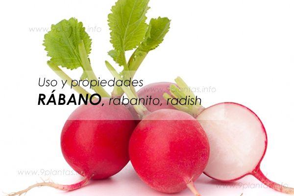 Rábano, rabanito, radish, ¿por qué debemos consumir?