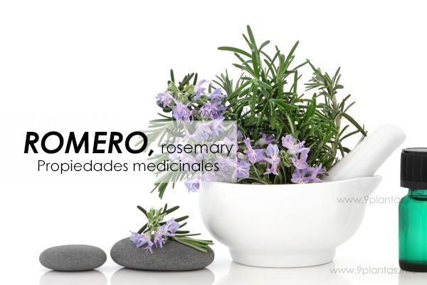 Romero, rosemary, propiedades medicinales