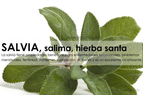 SALVIA, salima, hierba santa, sage propiedades