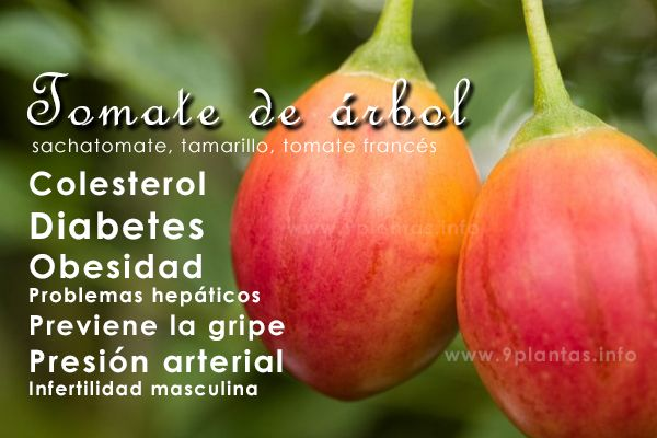Tomate de árbol, sachatomate, tamarillo, tomate francés