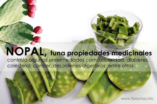 Nopal, tuna propiedades medicinales