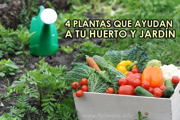4 plantas que ayudan a tu huerto y jardín