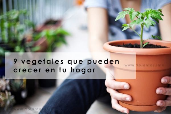 9 vegetales que pueden crecer en tu hogar